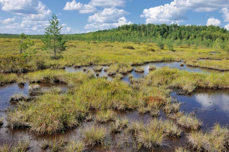 Растительность Беларуси